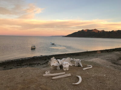 Bones on beach with sunset in Magdalena Bay